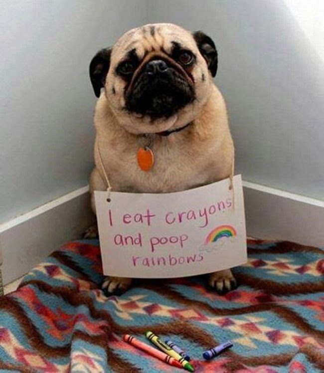dog shaming image Just Because They're Colorful, Doesn't Mean They Have Nutrients