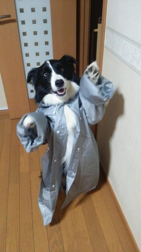 funny dogs image Rawr, I'm a Human! You Like My Costume?