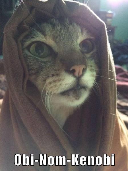 Obi-Nom-Kenobi