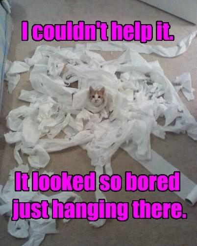 captions Cats funny - 8566669824