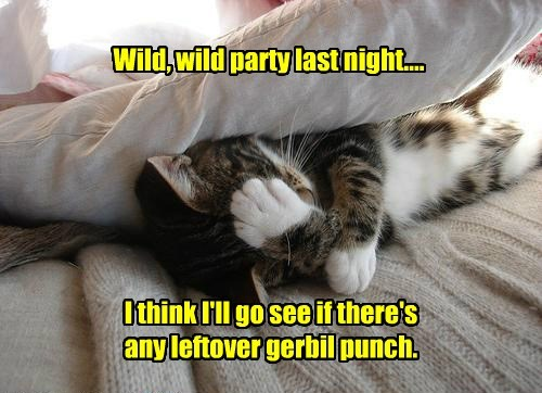 Wild, wild party last night.... I think I'll go see if there's any leftover gerbil punch.