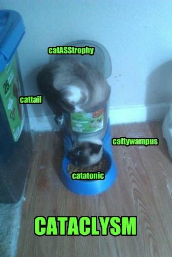 catASStrophy