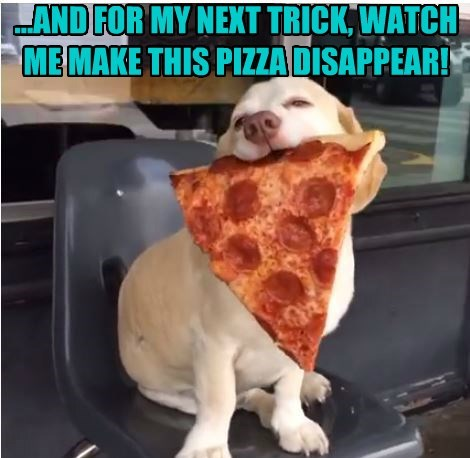 dogs pizza next trick disappear magician caption