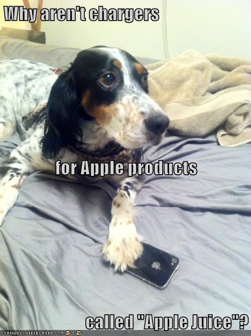 dogs,apple juice,charger,apple products,caption