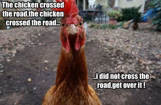 chicken captions funny - 8567290112