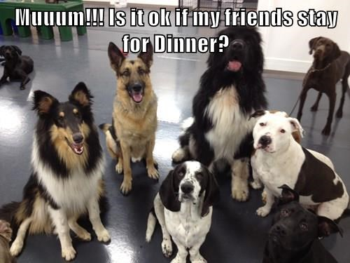 dogs,stay,friends,dinner,caption