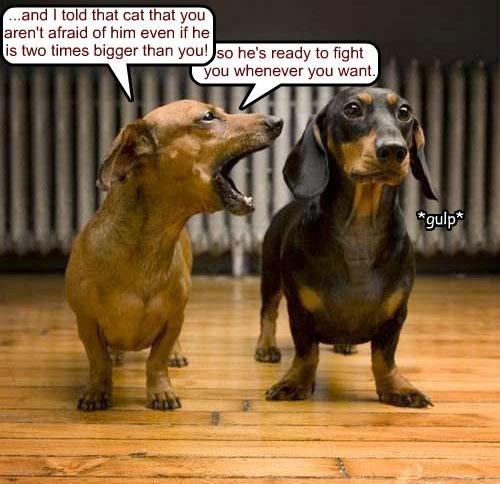 gulp cat dogs bigger afraid fight caption - 8567374080