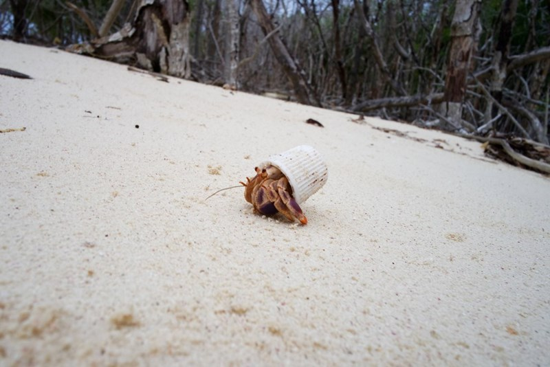 A hermit crap uses a toothpaste cap for its shell, depressing everyone.
