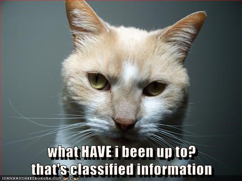 lolcats - Cat - what HAVE i been up to? that's classified information ICANHASCHEEZBURGER.cOM Ge