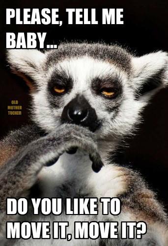 lemurs,madagascar,funny