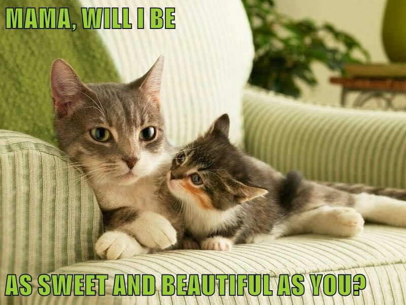 animals mama sweet caption Cats beautiful - 8567566336