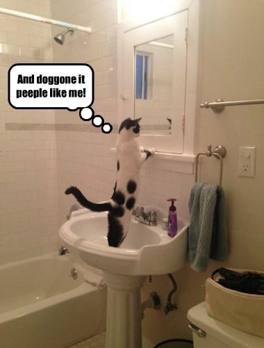 Cats captions funny - 8567617280