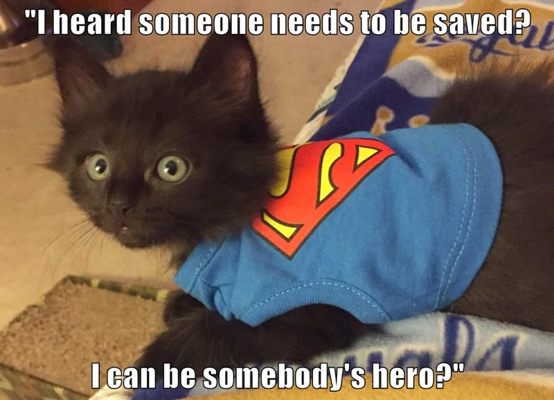 animals cute superheroes caption Cats - 8567656704