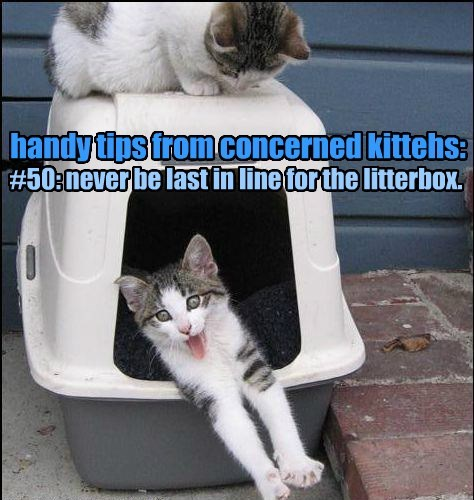 litter box,caption,Cats,funny