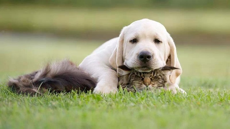 cute dogs image This is My Favorite Pillow