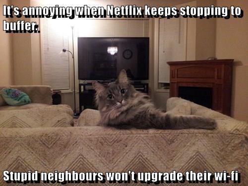 animals buffer cat neighbors upgrade annoying wifi caption stupid - 8567767808