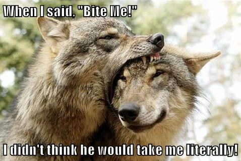 animals captions funny wolves - 8567785472