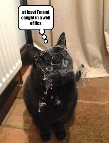 captions cute Cats funny - 8567787520