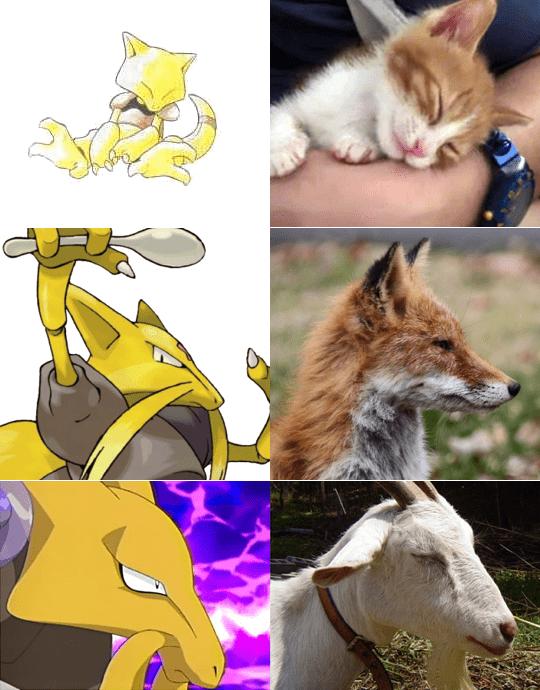 pokemon memes abra kitten