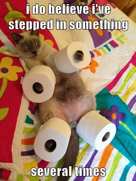 animals toilet paper caption Cats funny - 8567909632