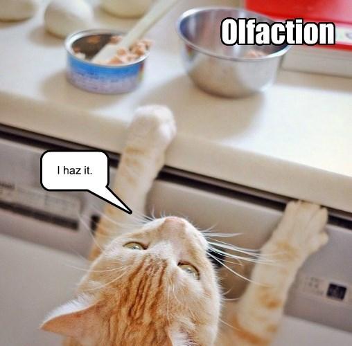 lolcats - Cat - Olfaction I haz it.