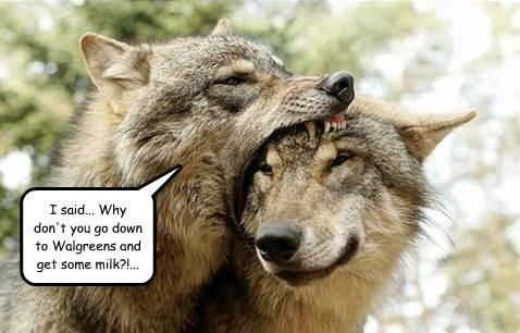 wolves captions funny