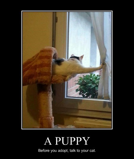 lolcats - Photo caption - A PUPPY Before you adopt, talk to your cat.