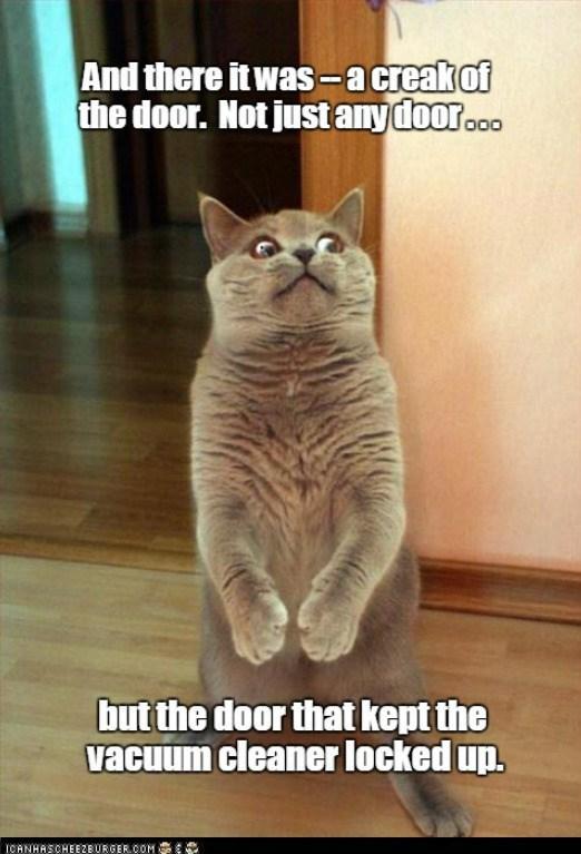 A feline horror story