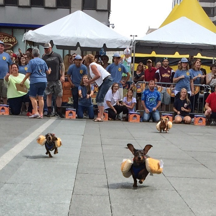cute dogs The Cutest Hot Dogs You've Ever Seen Had a Race to Kick Off Oktoberfest