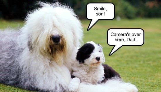 dogs here over camera caption smile - 8568035328