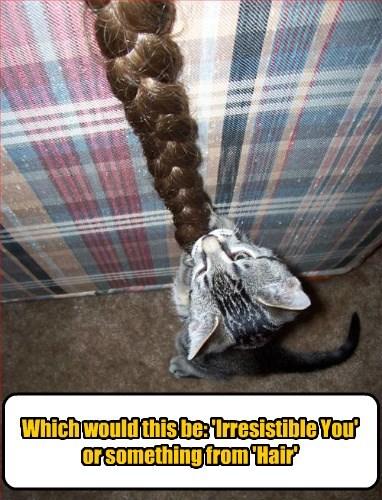 hair caption Cats funny - 8568050432
