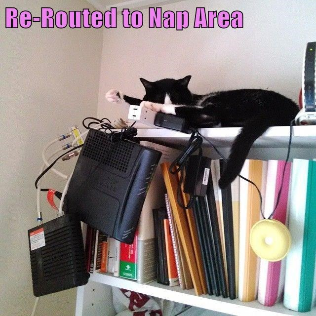 lolcats - Cat - Re-Routed to Nap Area 12