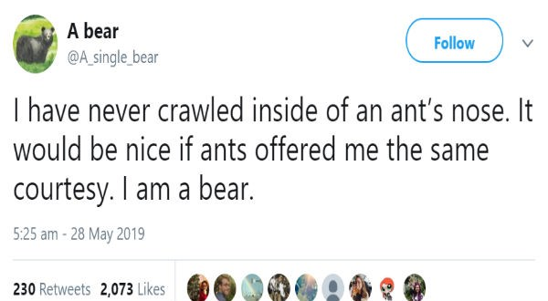 funny tweets about bear life