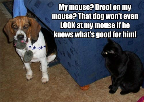 lolcats - Dog breed - My mouse? Drool on my mouse? That dog won't even LOOK at my mouse if he knows what's good for him! *uh-oh