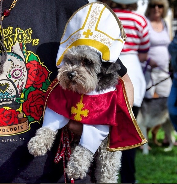 cute dogs pope image costume - 8568096000