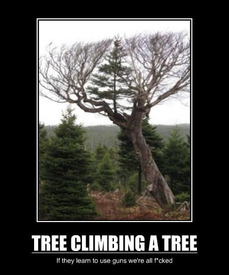 TREE CLIMBING A TREE