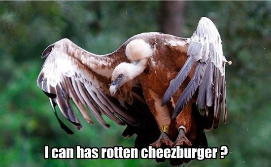 Cheezburger Image 8568305920