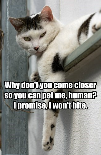 captions Cats funny - 8568309760