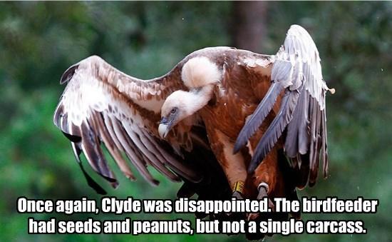 vulture bird feeder funny - 8568315648