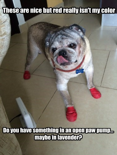 dogs captions cute - 8568371968