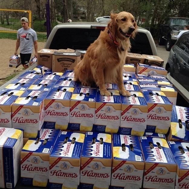 party-fails-mans-beerst-friend