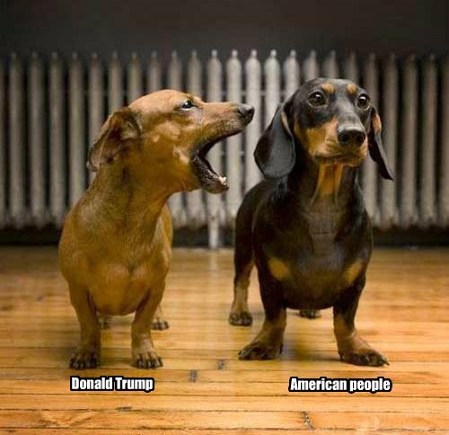 dogs,people,donald trump,caption,american