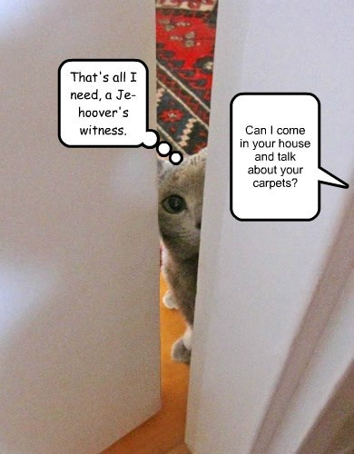 jehovas-witness,cat,caption,hoover,carpet