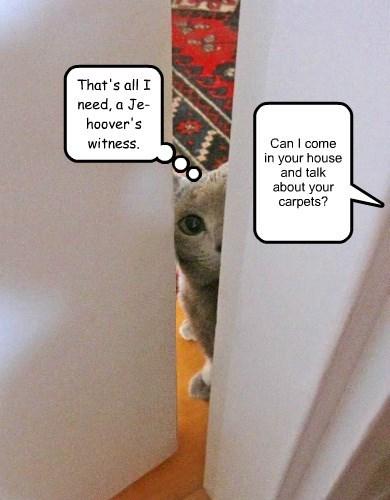 jehovas-witness cat caption hoover carpet - 8568494336