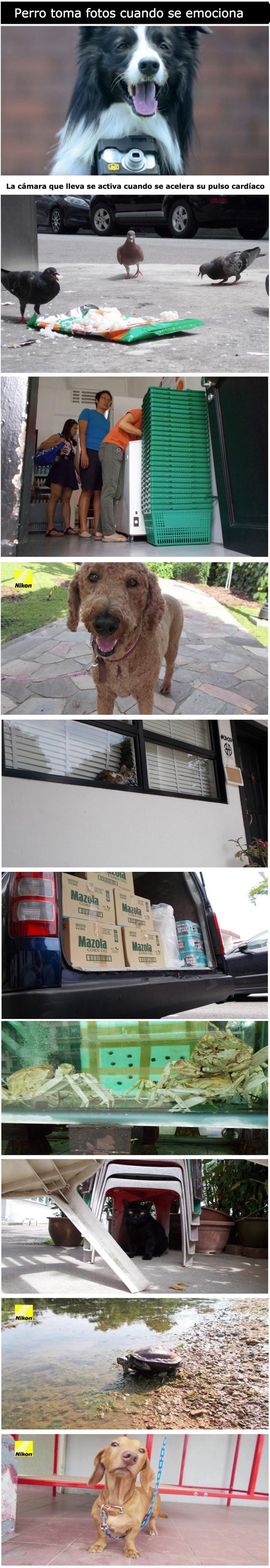 perros curiosidades animales fotos - 8568523264