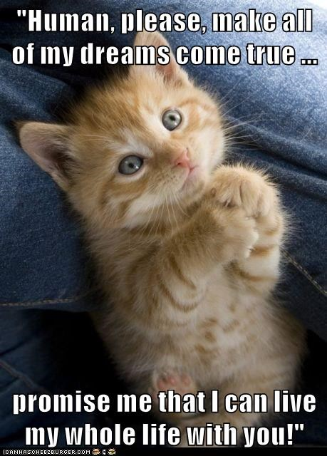 """lolcats - Photo caption - """"Human, please, make all of my dreamS come true . promise me that I can live my whole life with you!"""" ICANHASCHEEZBURGER.COM G"""