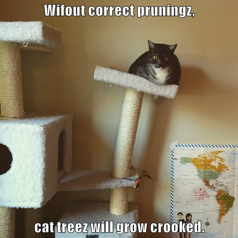 lolcats - Cat - Wifout correct pruningz, ....... EAMARA TLERTIN Mihdalk SKYLAN cat treez will grow crooked.