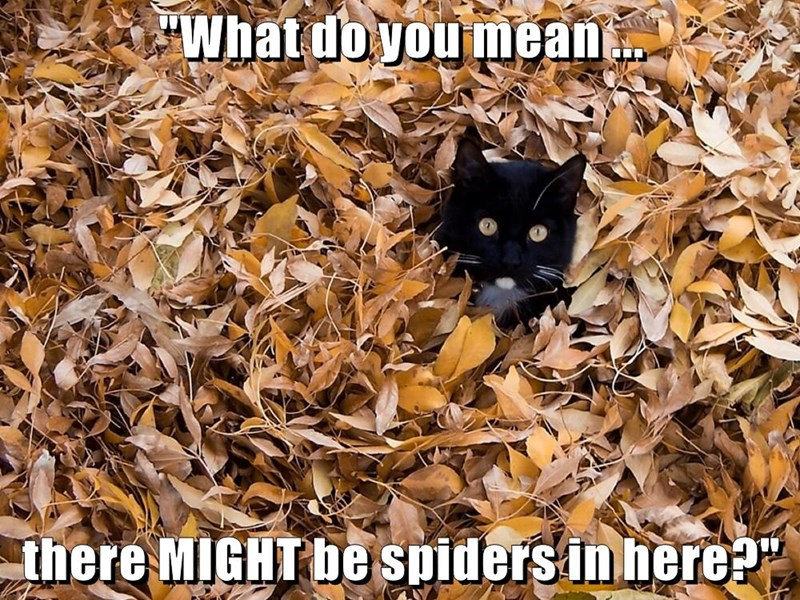 animals spiders captions Cats funny - 8568595200