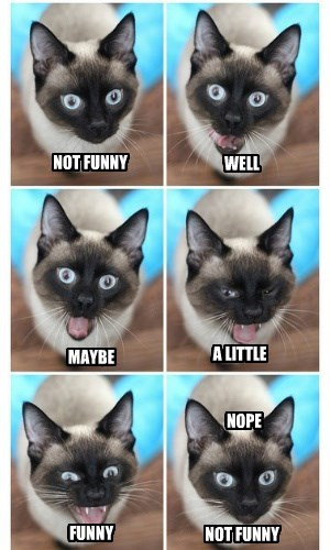 lolcats - Cat - NOT FUNNY WELL MAYBE ALITTLE NOPE FUNNY NOT FUNNY