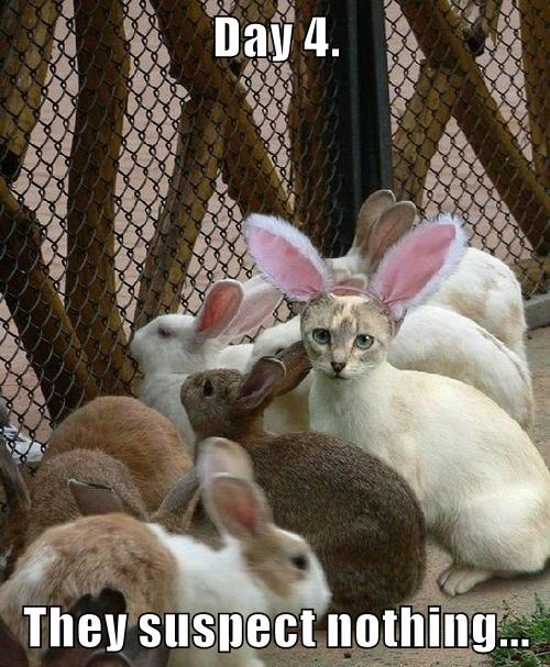 animals captions Cats bunny funny - 8568697600